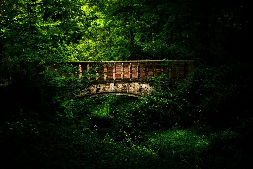 Bridge forest trees beautiful landscape wallpaper
