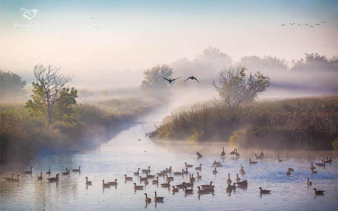 duck autumn October fog river morning ducks wallpaper
