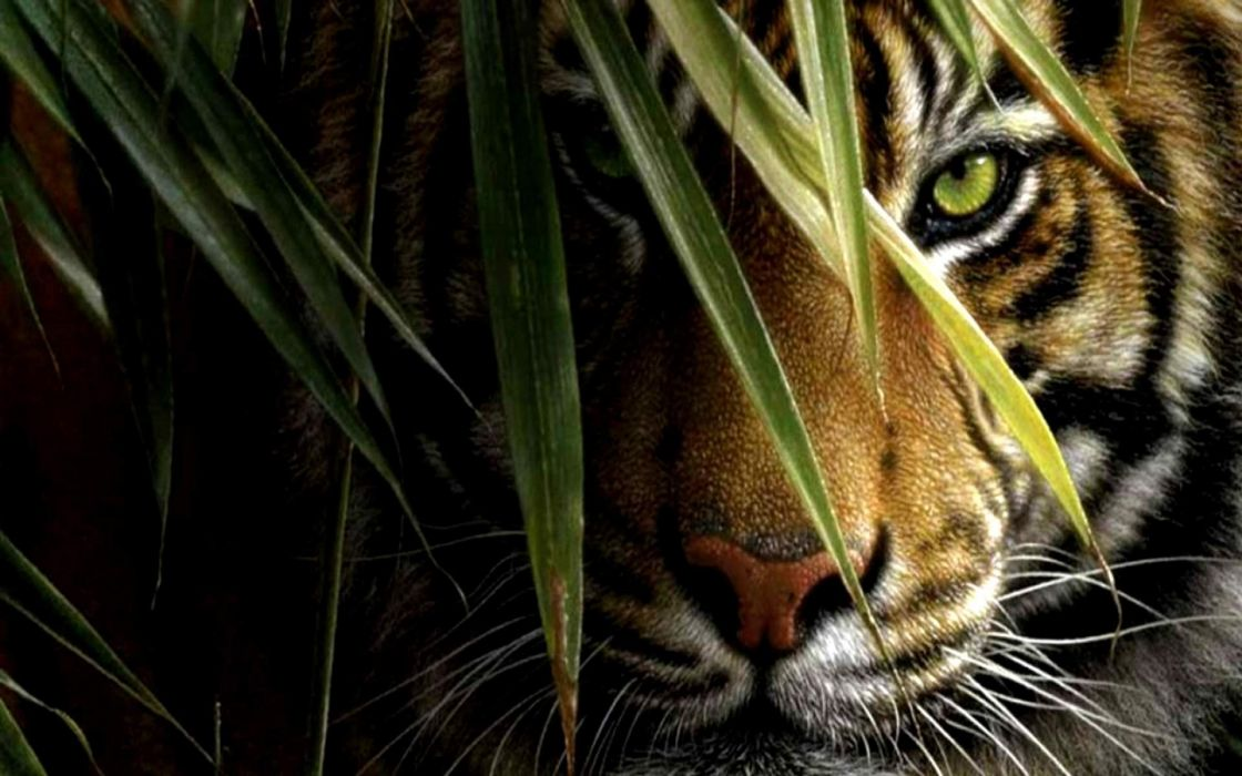 Wallpaper Hd Tiger Eyes Hd Pictures 4 Hd Wallpapers Wallpaper