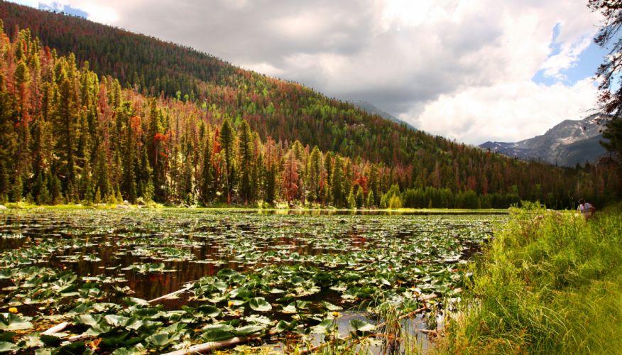 lily pad lake lillies forest autumn mountain f wallpaper