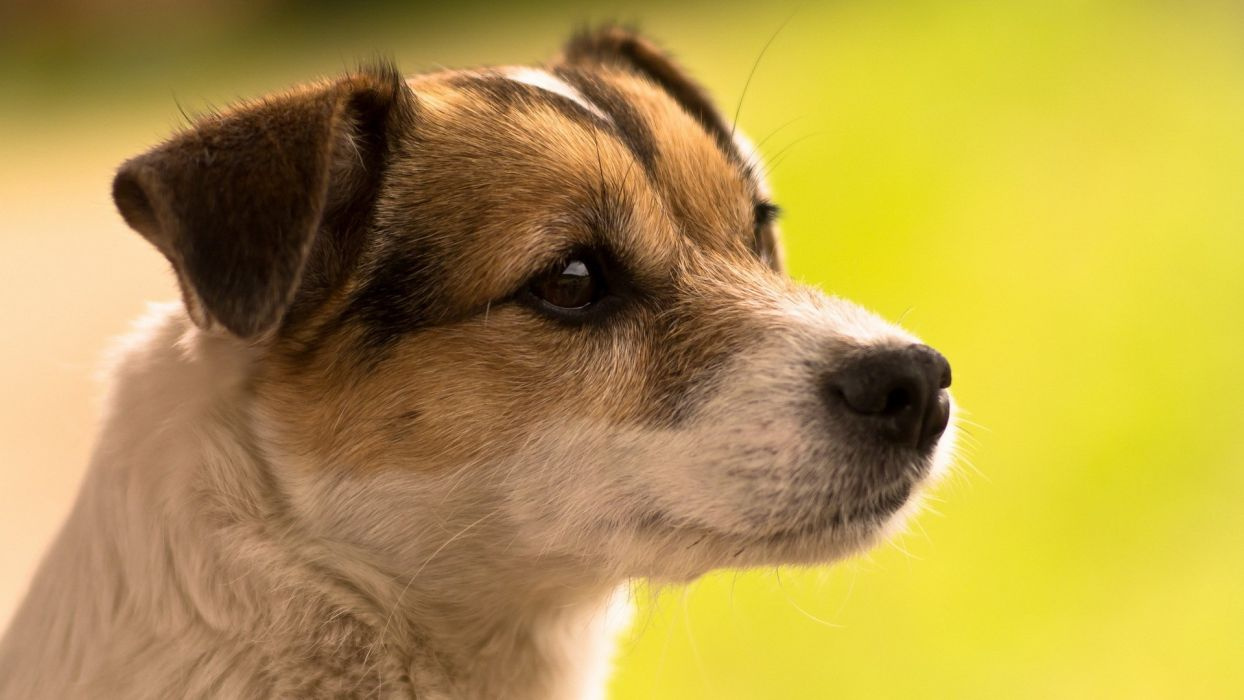 dog animal puppy cute frendly dogs wallpaper