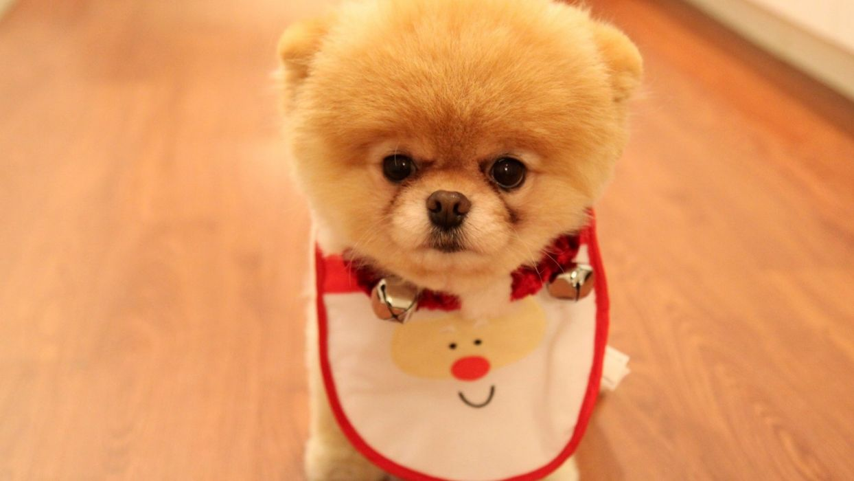 Dog Animal Friendly Puppy Cute Dogs Wallpaper 1920x1080 542237