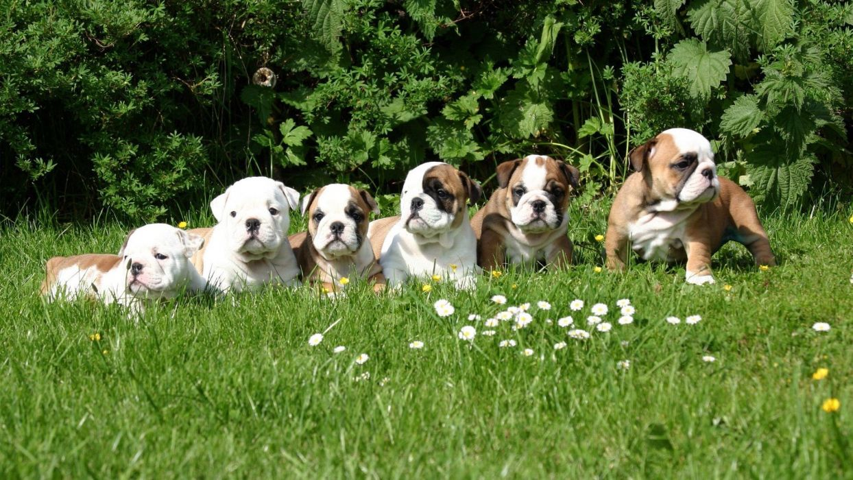 dog animal friendly puppy cute dogs wallpaper