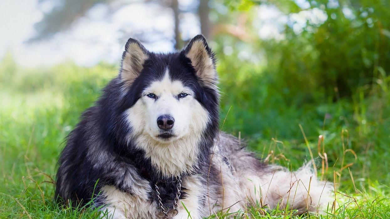 dog animal friendly puppy cute dogs wallpaper