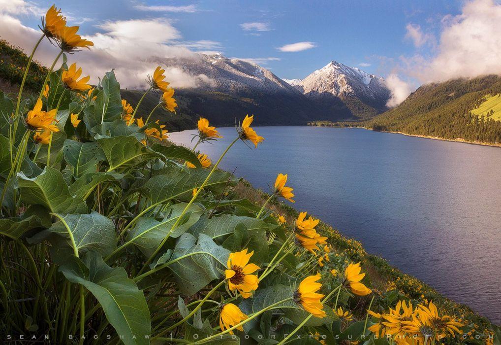 turkey sea mountain landscape flower forest tree yellow beautiful snow wallpaper