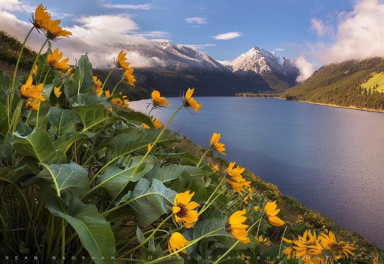Turkey Sea Mountain Landscape Flower Forest Tree Yellow Beautiful