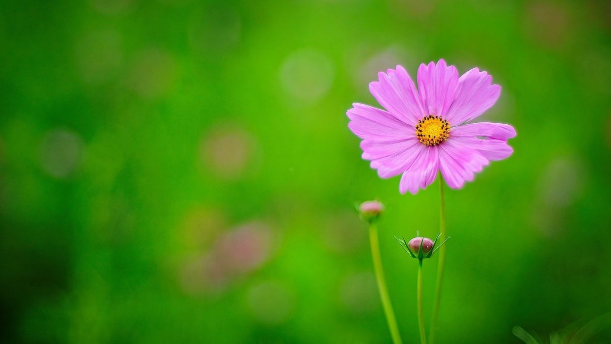 flower nature plant beautiful flowers colorful wallpaper