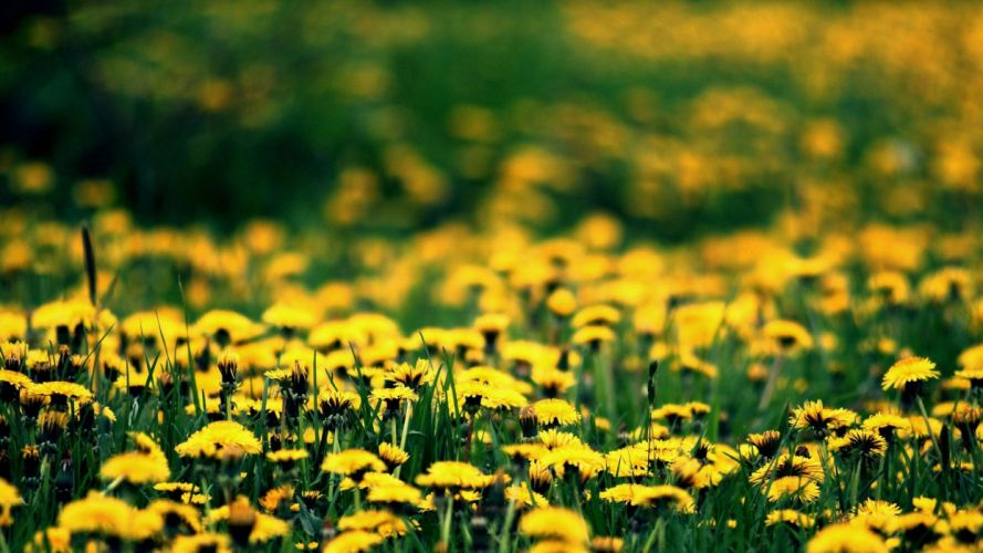 flower nature plant beautiful flowers wallpaper