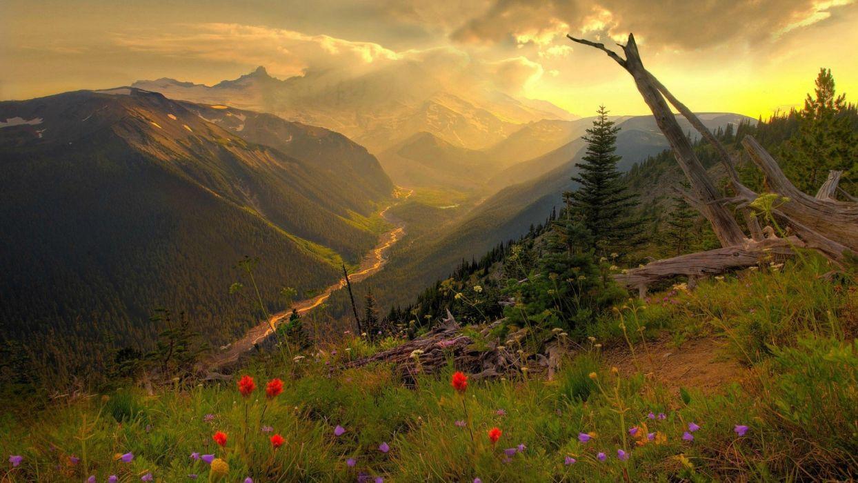 mount-rainier-washington landscape flower mountain wallpaper