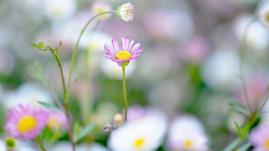 flower plant nature beautiful colorful flowers wallpaper