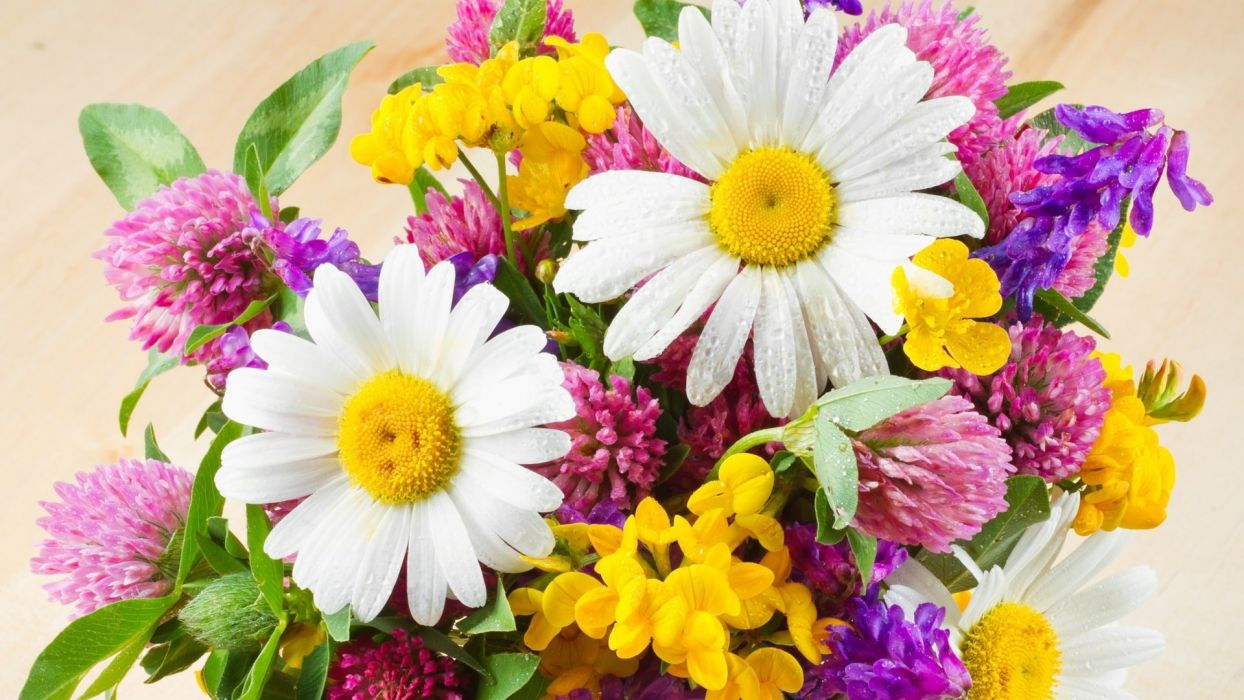 flower nature plant beautiful colorful flowers wallpaper