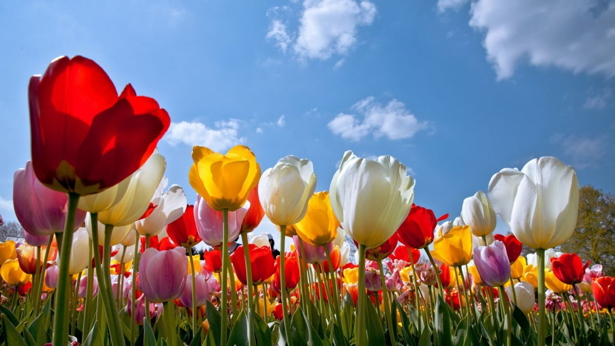 Free Colorful Flower Wallpaper Downloads: Flower Nature Plant Beautiful Colorful Flowers Wallpaper