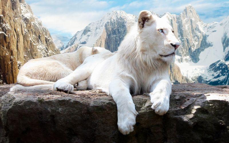 Snow Lion mountain wallpaper
