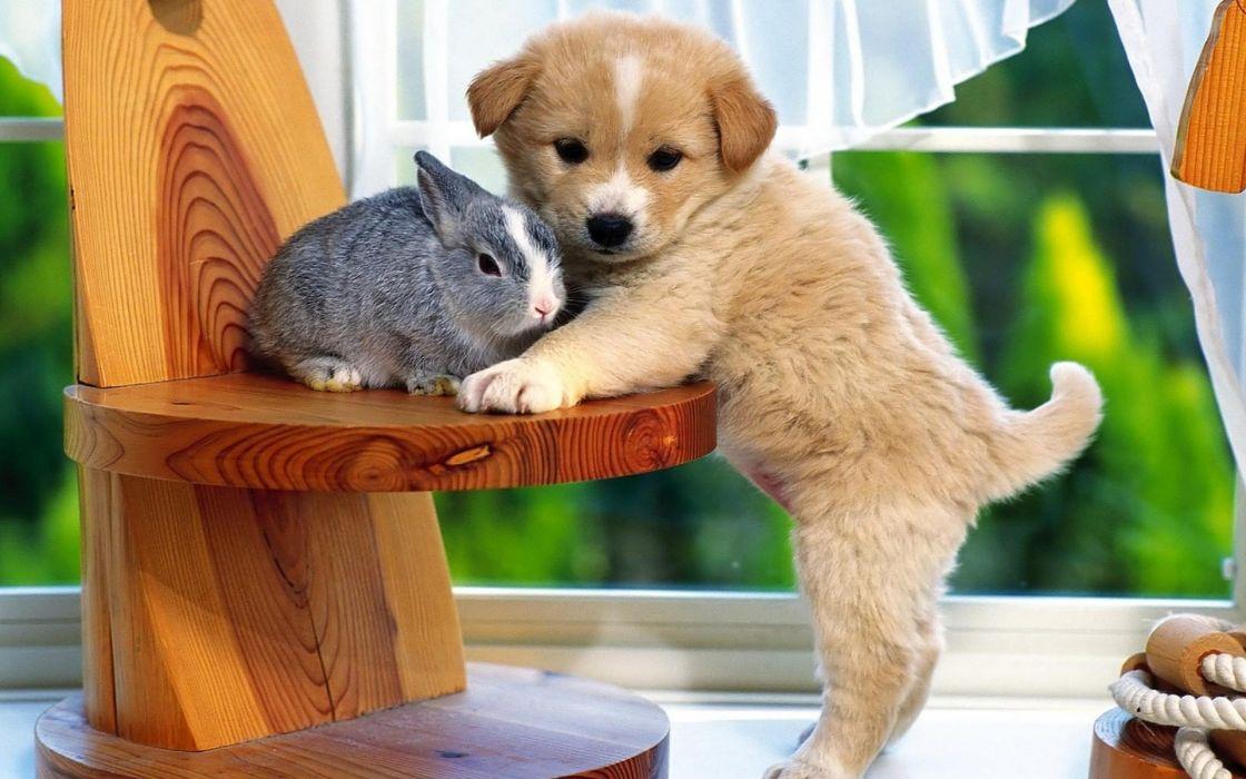 rabbit dog chair window sill wallpaper