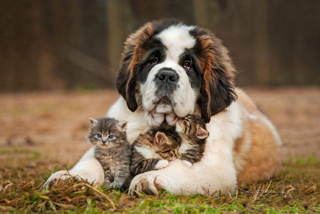 dog kittens care wallpaper