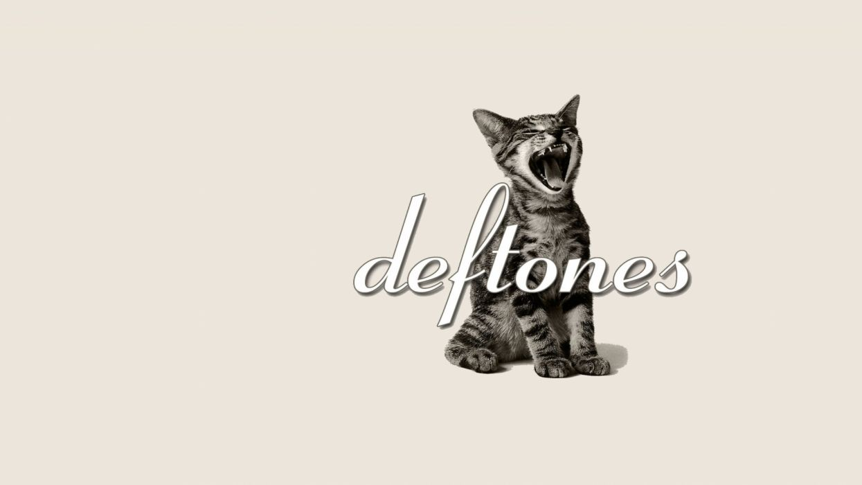 DEFTONES alternative metal experimental rock nu-metal heavy hard cat kitten wallpaper