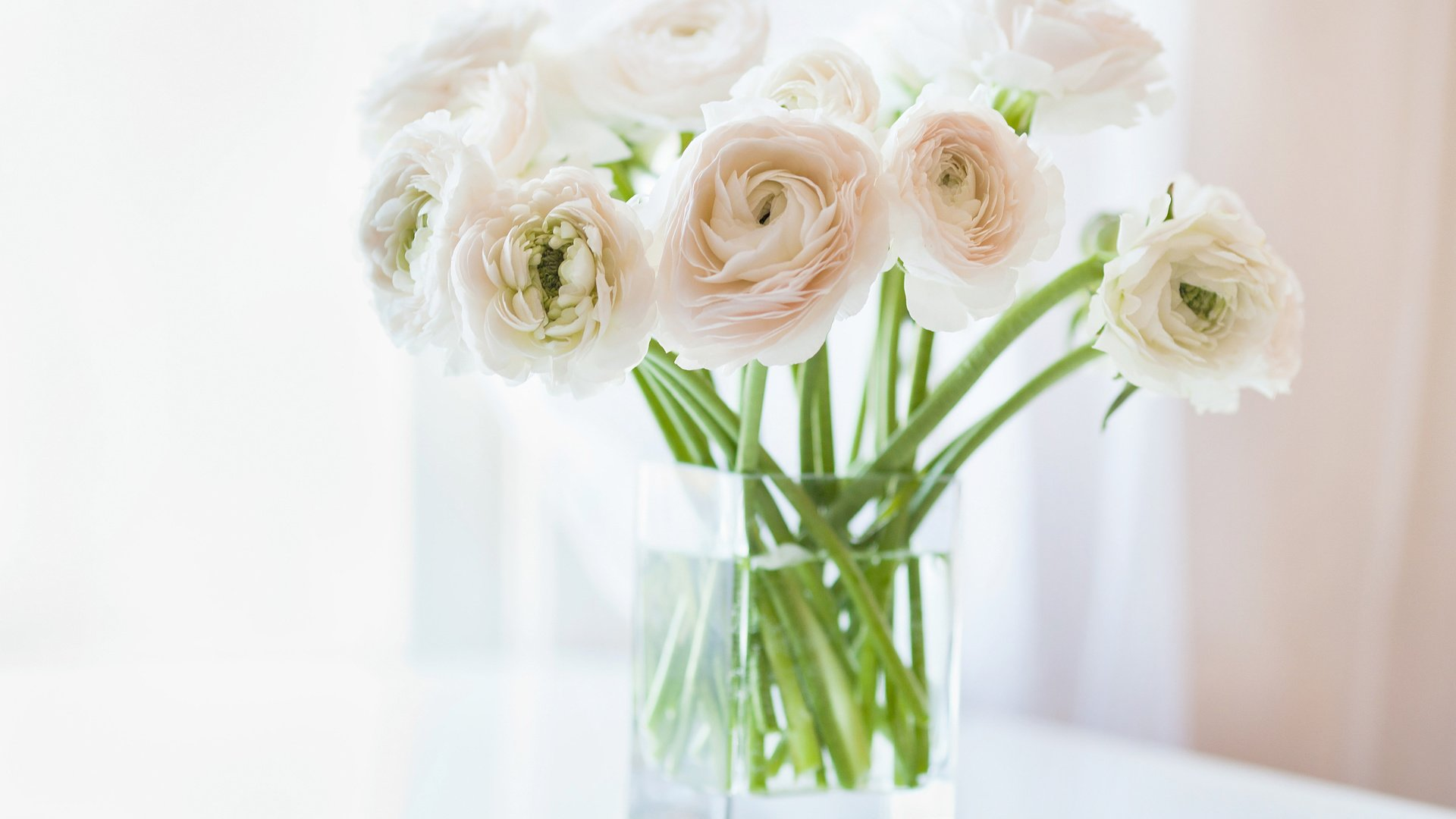 Обои на рабочий стол цветы ранункулюс