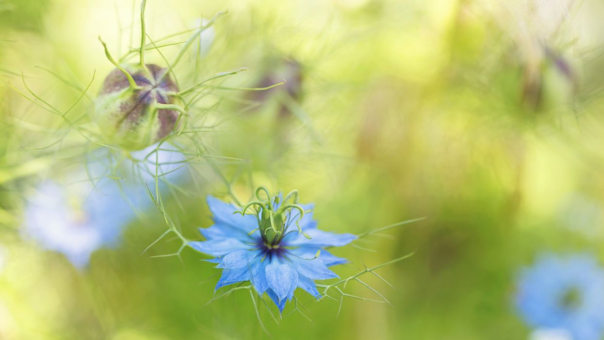 flower nature plant colorful beautiful flowers wallpaper
