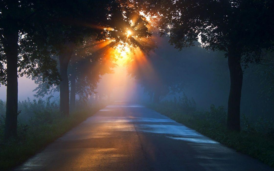 Road Sunlight Trees sunrise sunset fog rays wallpaper
