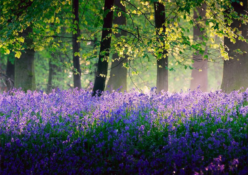 trees Flowers SPRING May fores wallpaper
