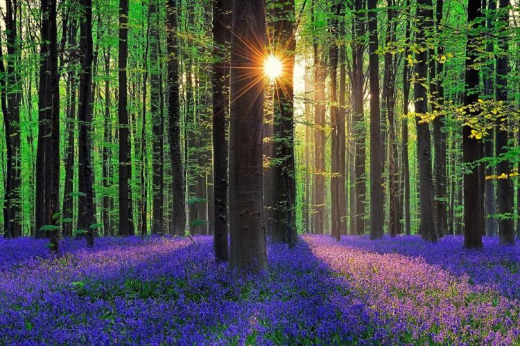 forest trees Flowers wallpaper