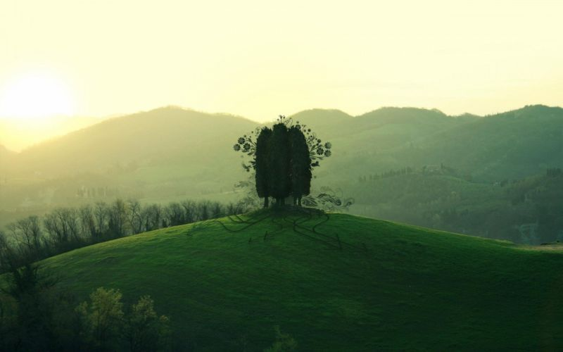 green mountain tree forest lanscape wallpaper