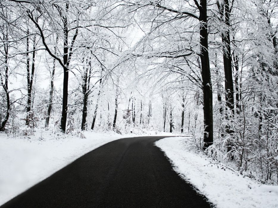 winter road tree beautiful snow wallpaper