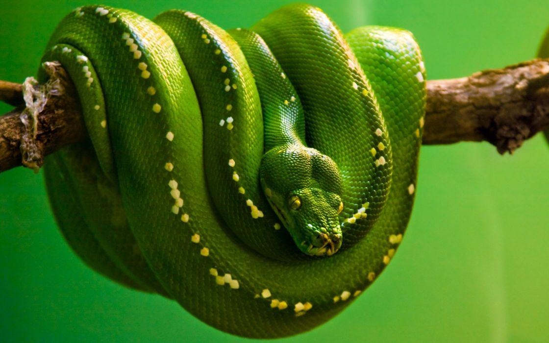 Green reptile branch wallpaper