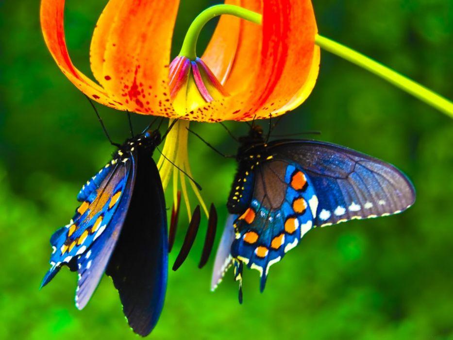 nature butterfly lower animal beautiful wallpaper