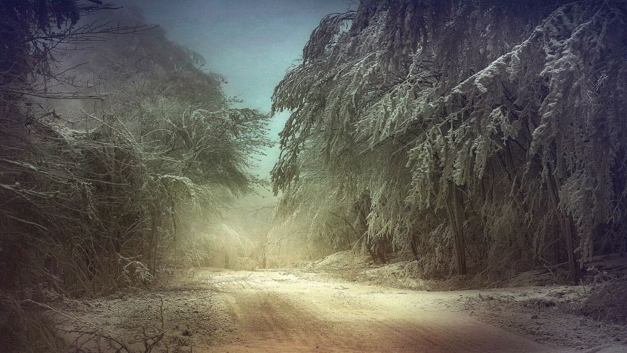 winter snow forest road wallpaper