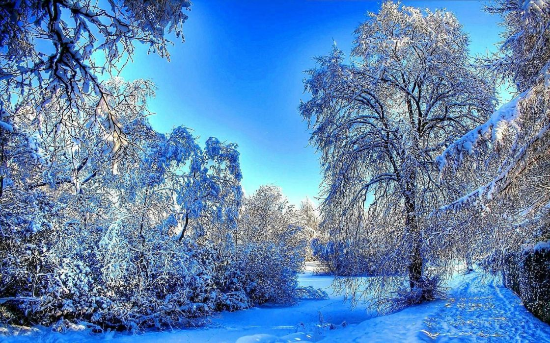 winter snow river forest wallpaper