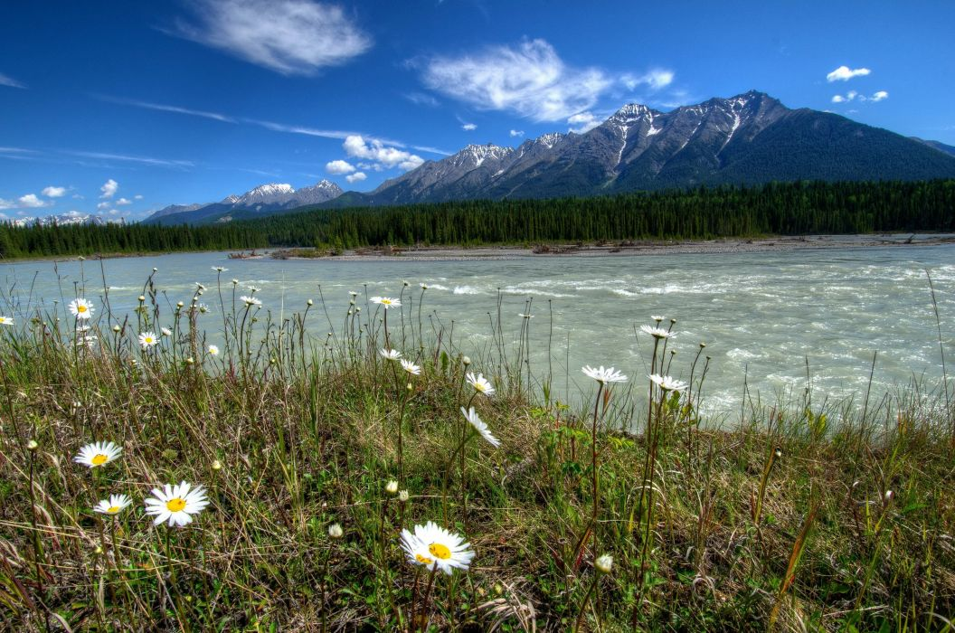 Rivers of Canada Parks landscape Daisies Mount wallpaper