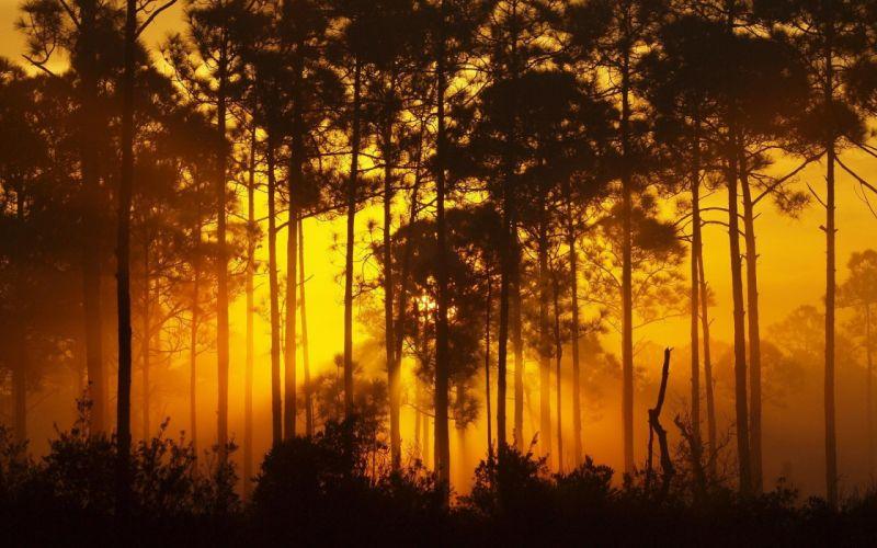 forest bush landscape forest tree sunset sunrise yellow brown orange wallpaper