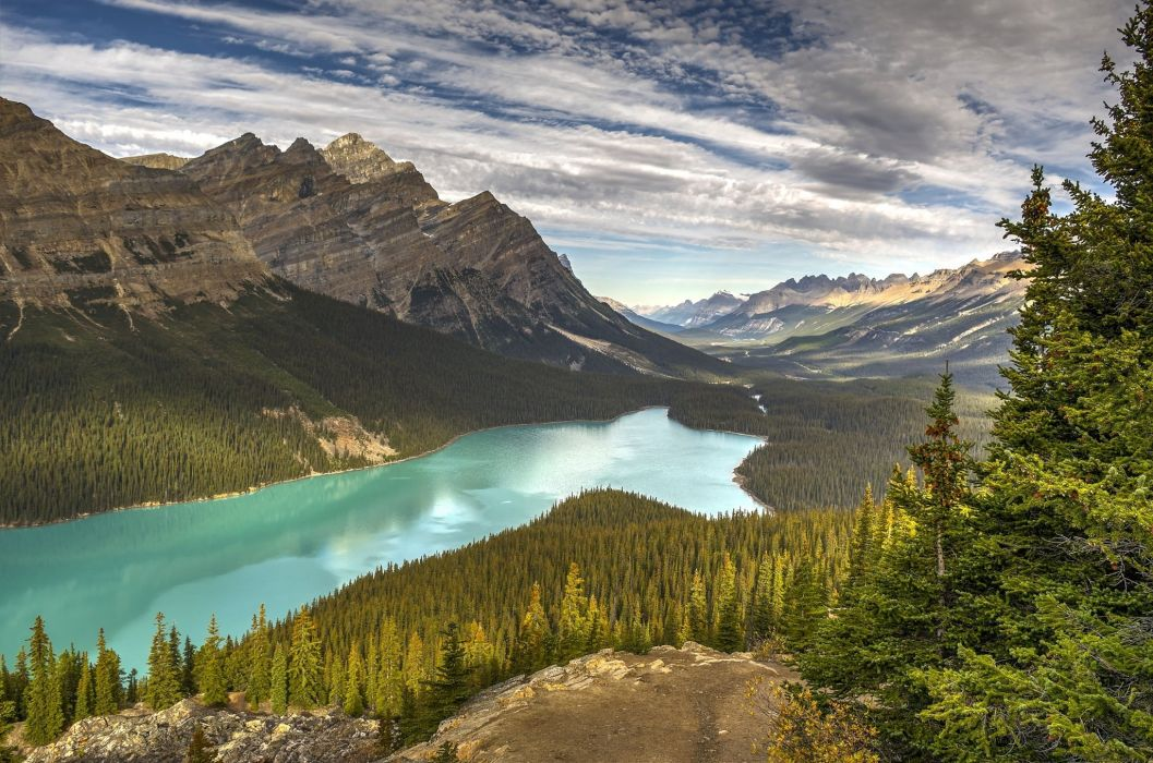 lake drink mountains forest landscape peyto lake banff national park canada trees spruce alberta wallpaper
