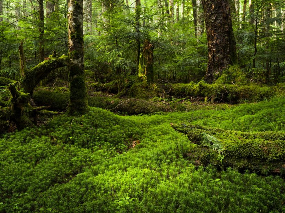 moss forest Japan wallpaper
