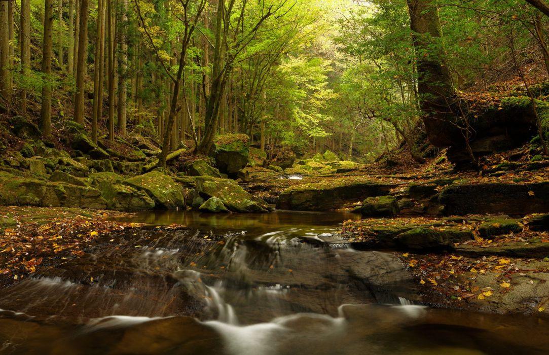 stones moss river trees Japan wallpaper