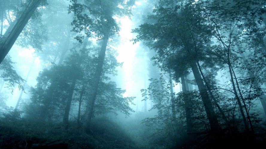 forest mist morning trees tall wallpaper