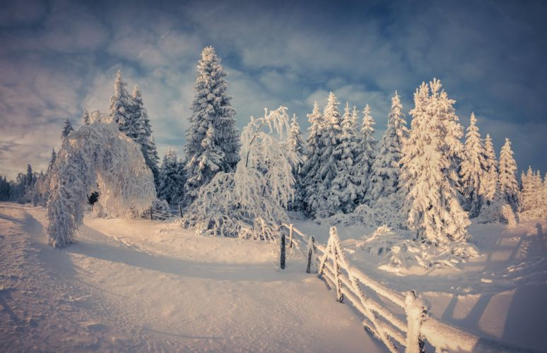 nature nature snow snow winter winter tree wallpaper