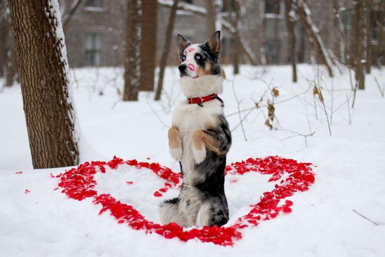 dog friend winter look dog heart mood love wallpaper