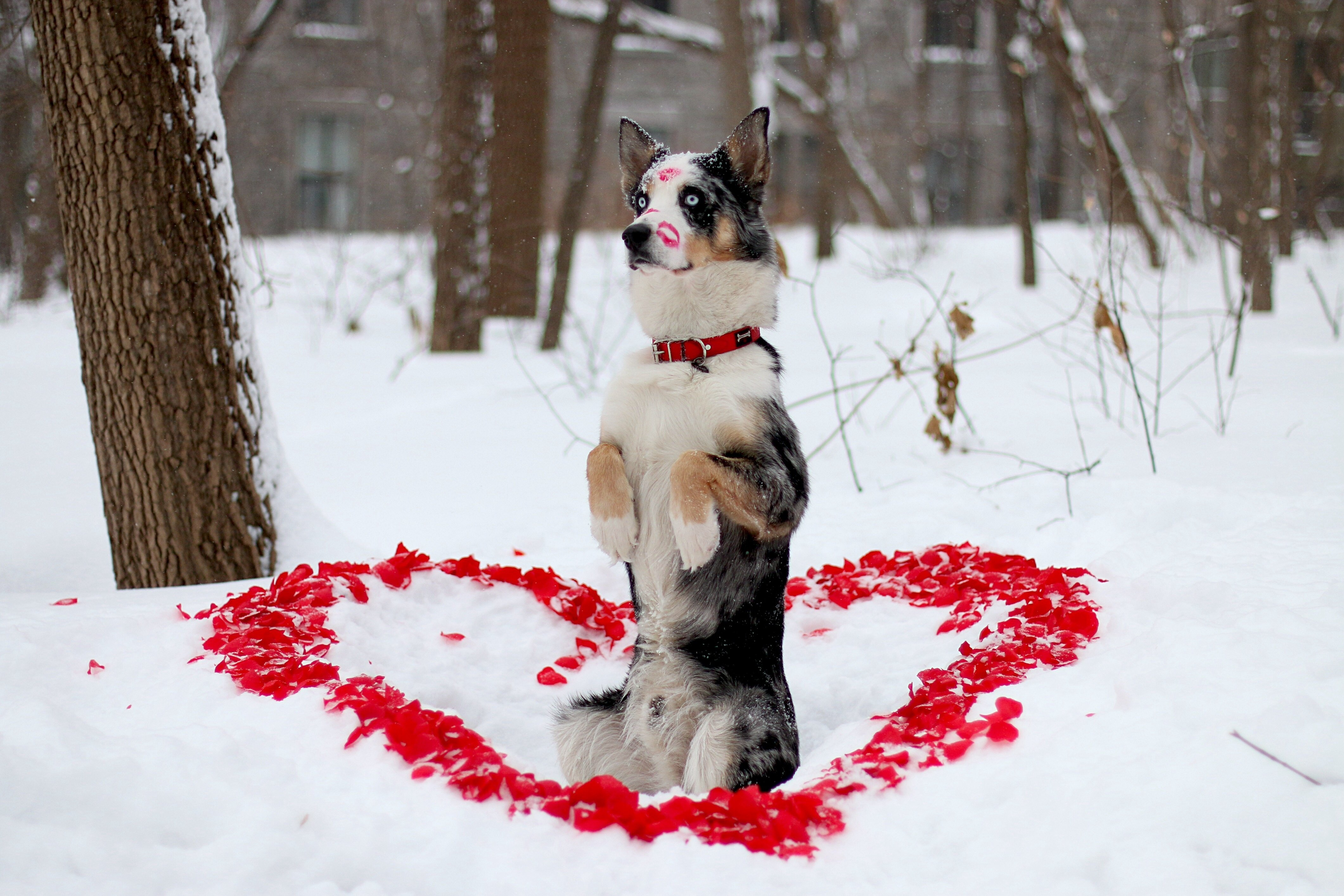 Dog friend winter look dog heart mood love wallpaper 4242x2828 559659 wallpaperup - Keeping outdoor dog happy winter ...