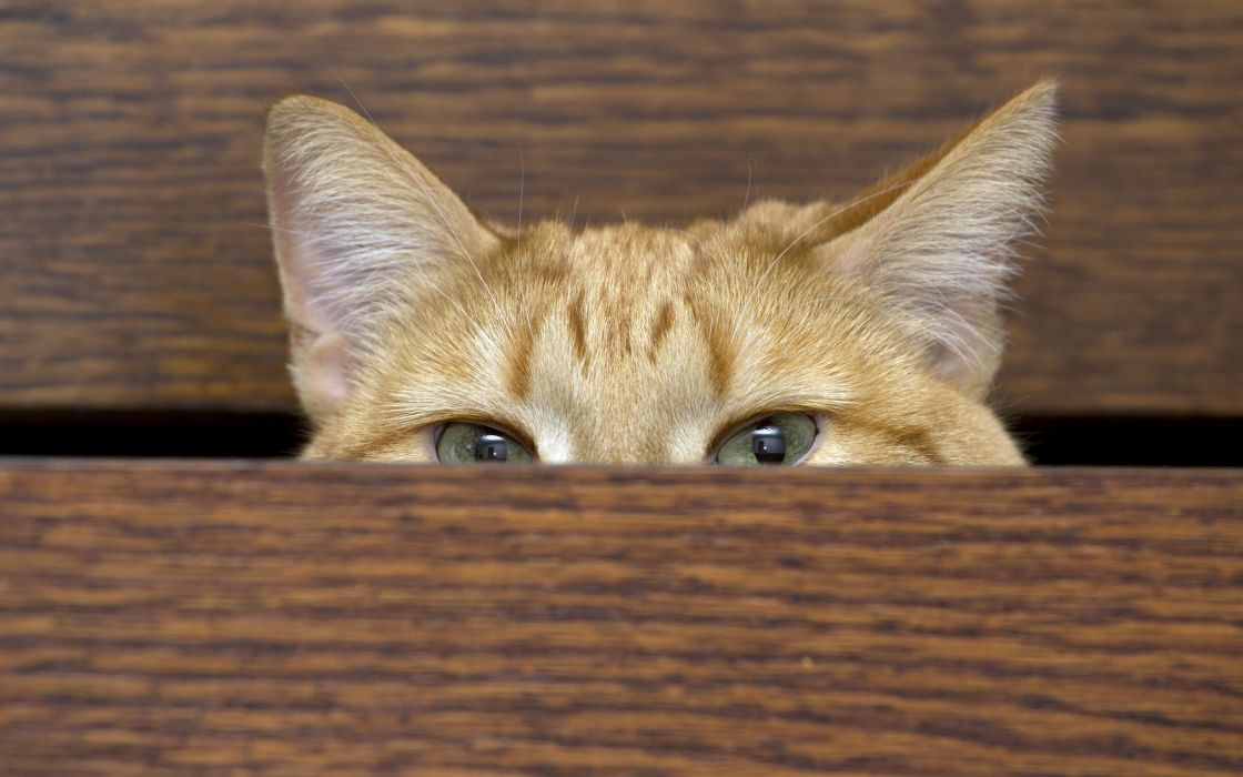 wardrobe house cat eyes eye look wallpaper