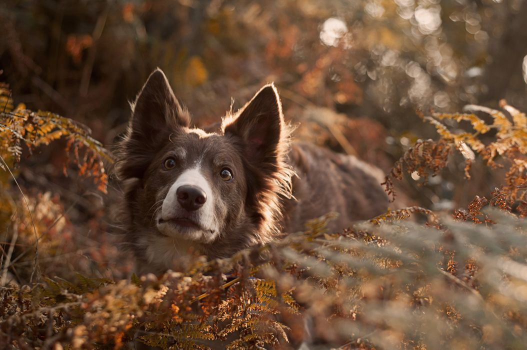 dog friend look forest wallpaper
