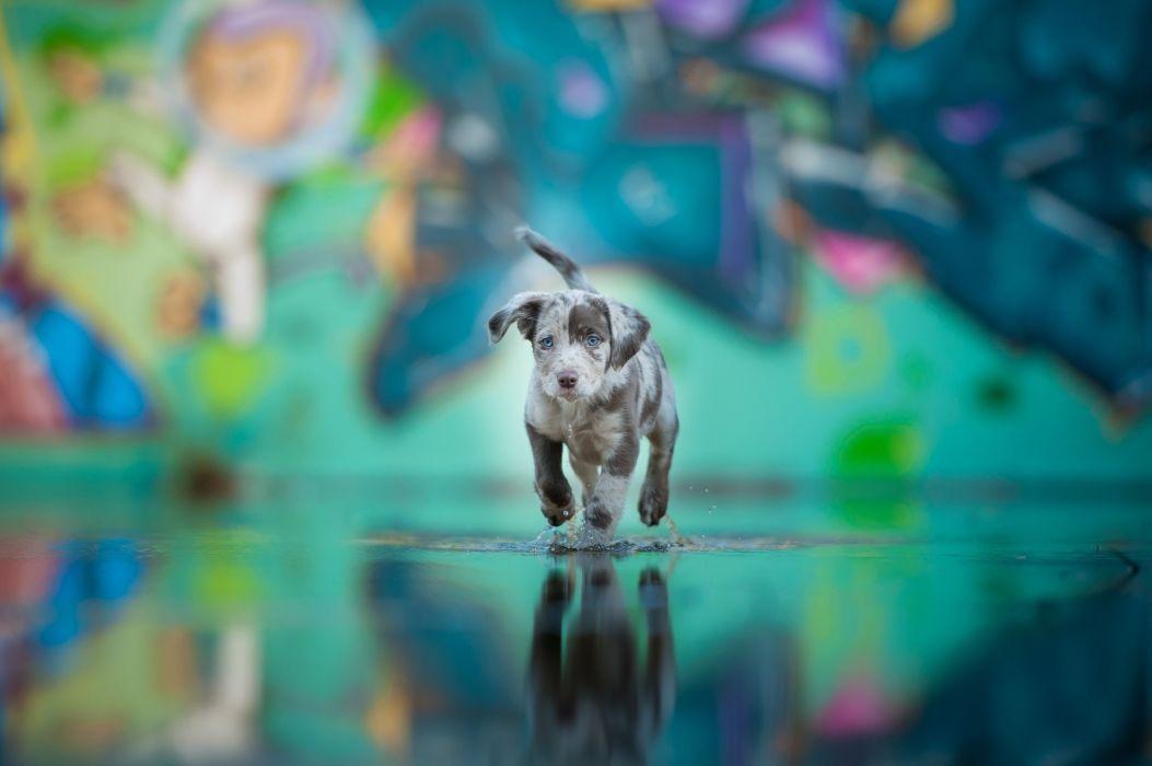 Dog Water Blue Eyes Puppy Baby Wallpaper 2048x1362 559701 Wallpaperup