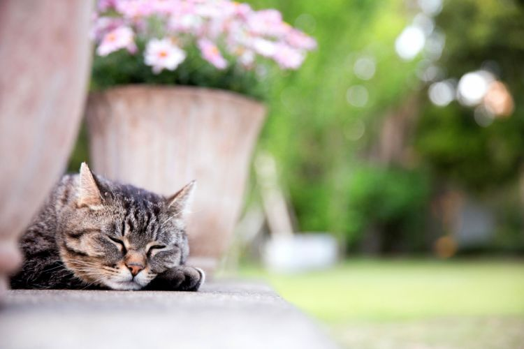 cat face sleeping paw wallpaper
