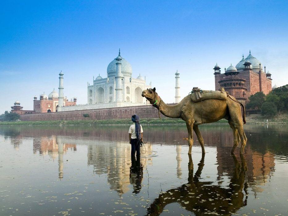 travel Camels rivers Taj Mahal India wallpaper