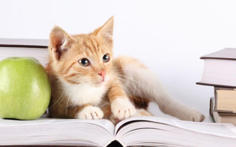 kitten red book apple cat baby wallpaper
