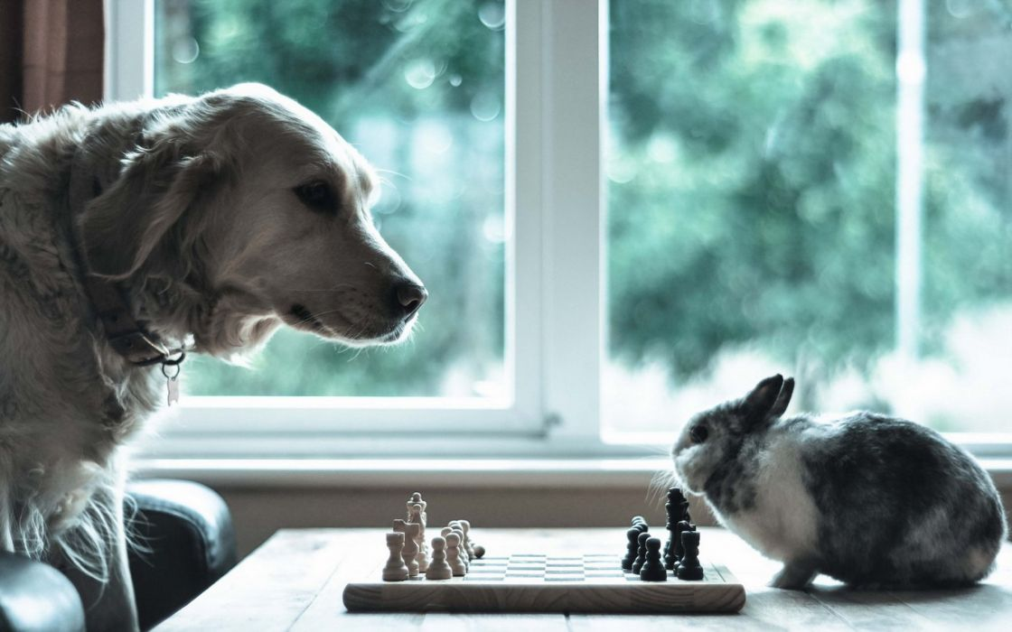 Dog rabbit chess situation animal humor funny wallpaper