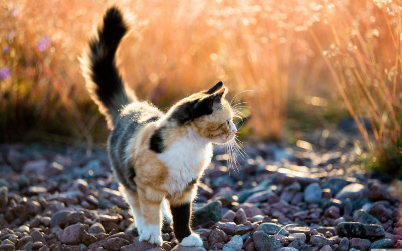 spotted cat Pebbles wallpaper