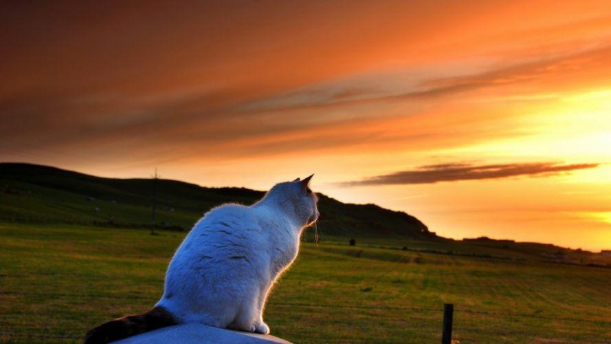 Gatto sunset field nature animals fence lawn cat bokeh mood wallpaper