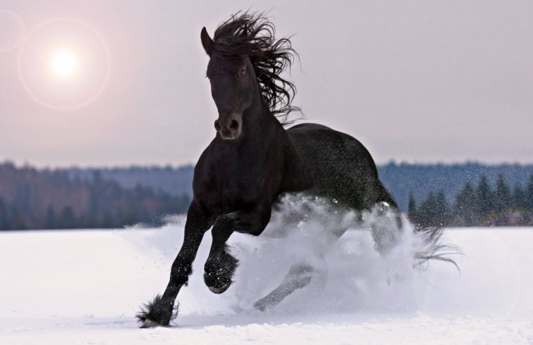 animals winter horse snow black wallpaper